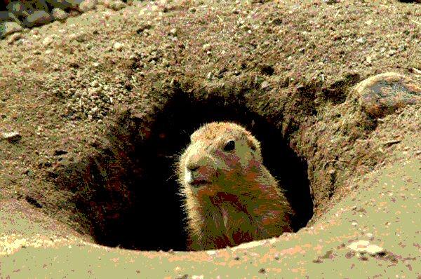 groundhog_now!